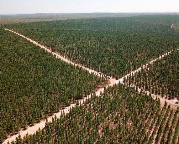 AGRO: RO avança no cultivo de floresta plantada e deve plantar mais 45 mil hectares