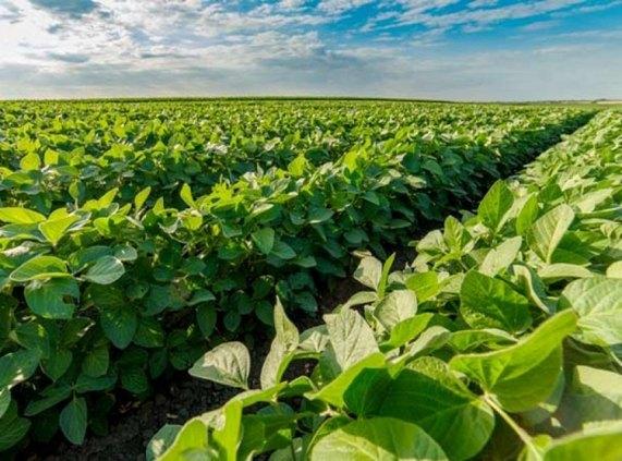 ESTRATÉGIA: Fim do vazio sanitário permite cultivo de soja em Rondônia