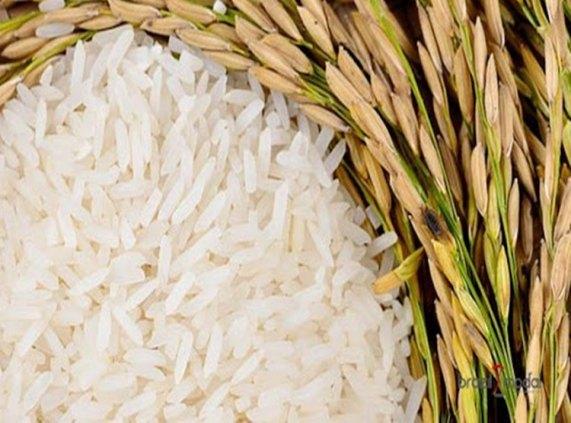 RONDÔNIA: Produção de arroz alcança 139 mil toneladas na safra 2019/20