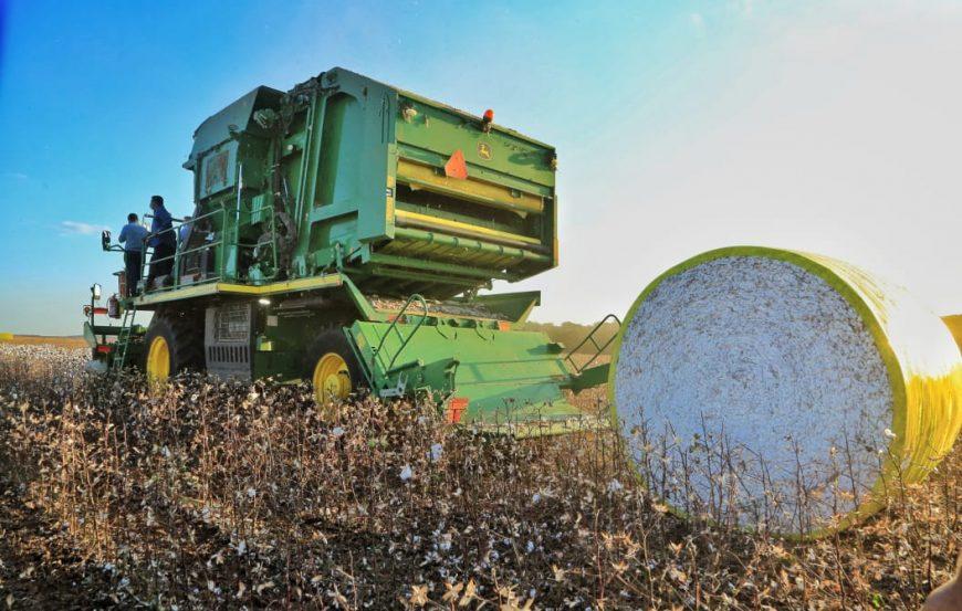 Governo de Rondônia faz abertura da colheita de algodão no Estado