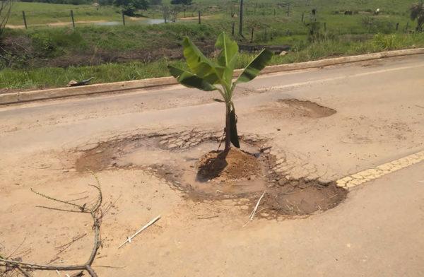 """Moradores plantam bananeira na BR 421 em protesto contra o DNIT; """"Aquilo ali virou uma BR assassina"""""""
